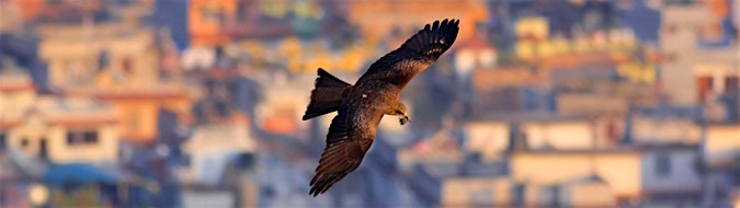 Black Kite over Kathmandu, by Sergio Seipke